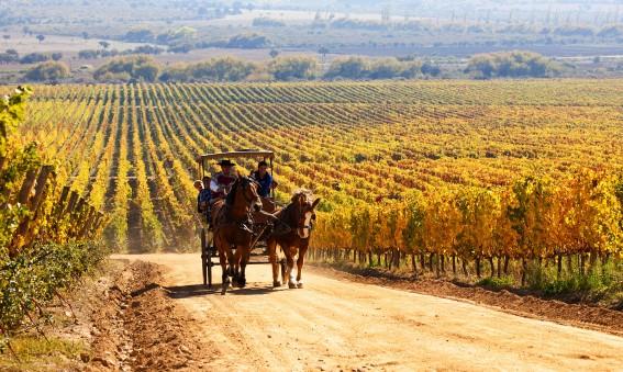 balade en calèche dans un vignoble chilien