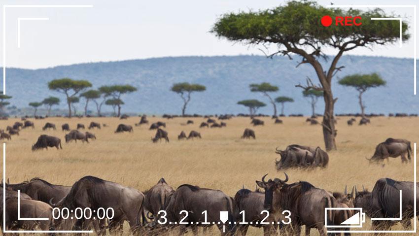 Masaï Mara au Kenya