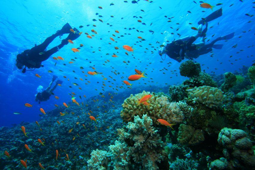Plongée au Honduras