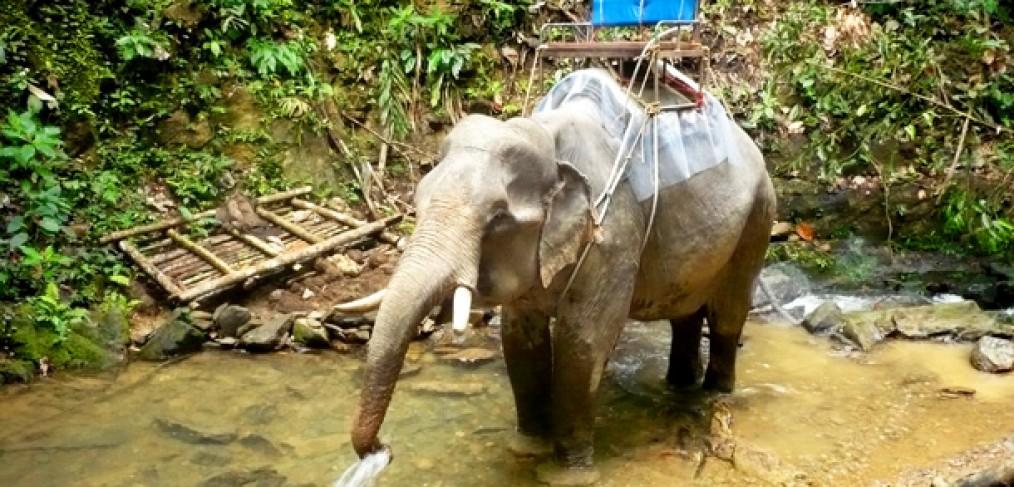 Khao-Sok-le-Paradis-est-en-Thailande