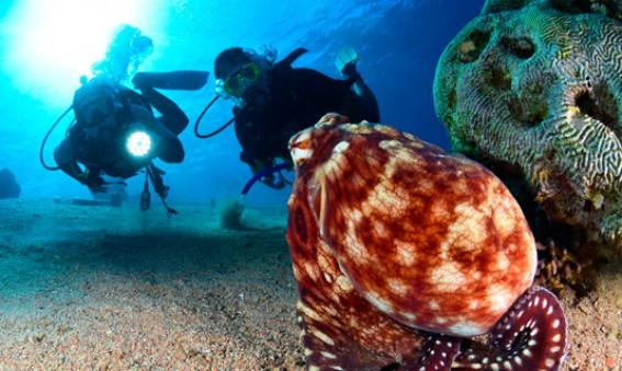 Aqaba-royaume-des-recifs-coralliens-MarcoetVasco