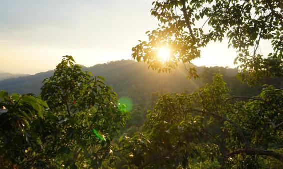 The Gibbon Experience au Laos