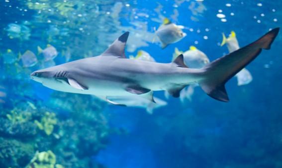 Nager près des requins à Las Vegas