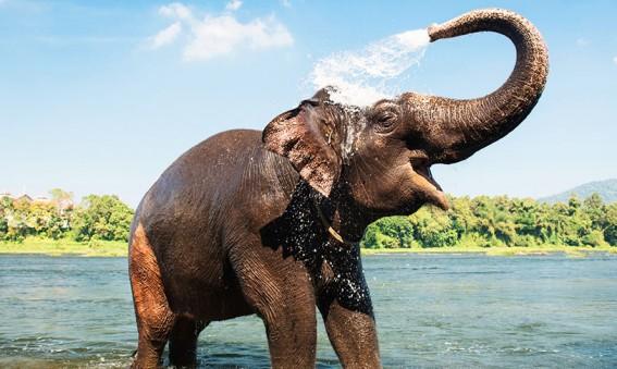 Elephant Mondulkiri