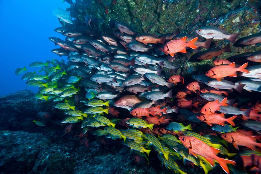 Divers poissons multicolores vus en plongée au Costa Rica