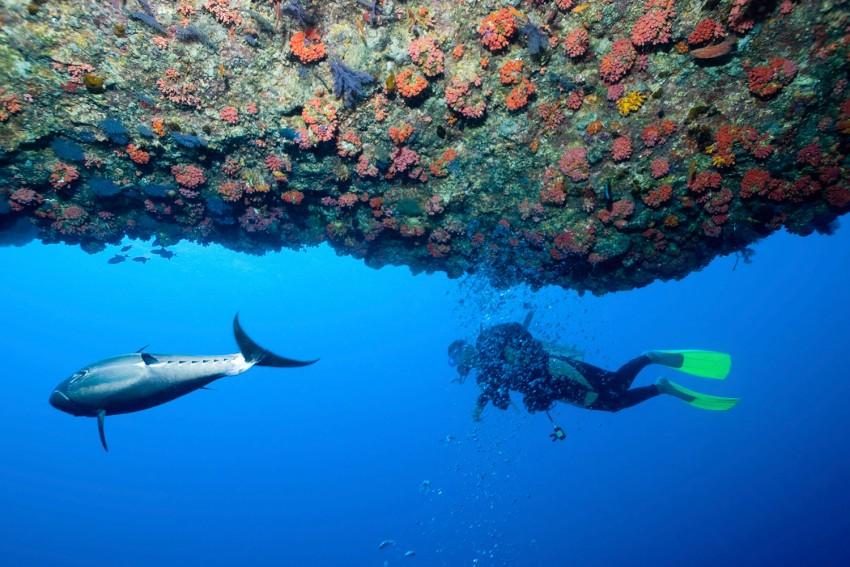 un plongeur aux Maldives, un des meilleurs spots de plongée