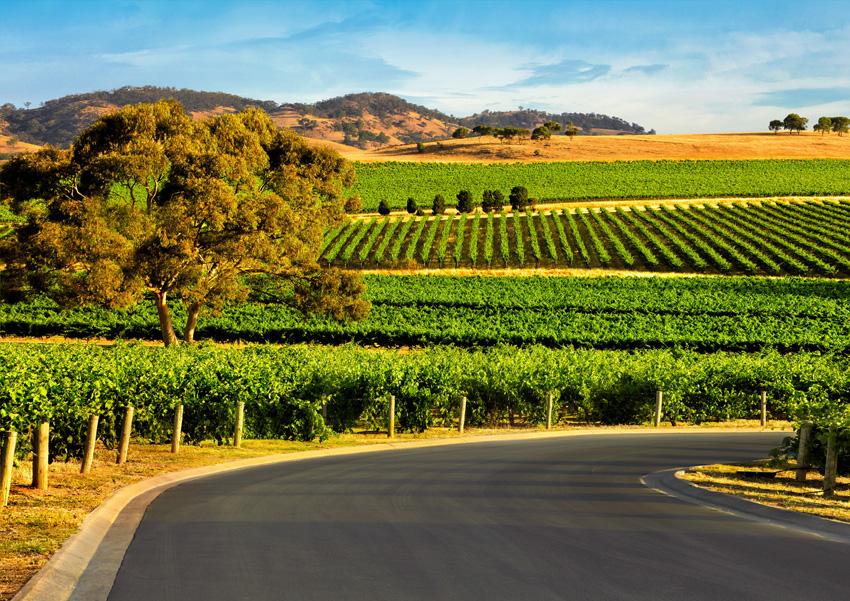 Région viticole de la Barossa Valley et de la Clare Valley en Australie