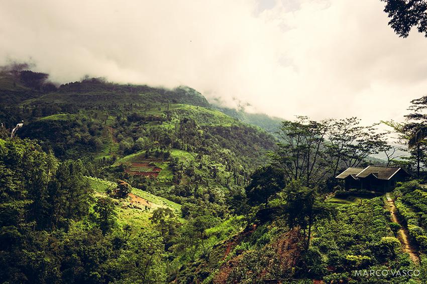 Sri Lanka_5